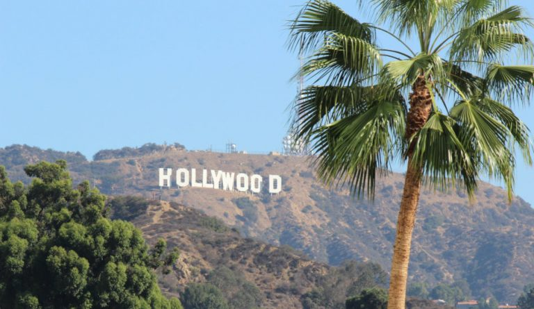 A palm tree in the foreground with the Hollywood sign in the background.