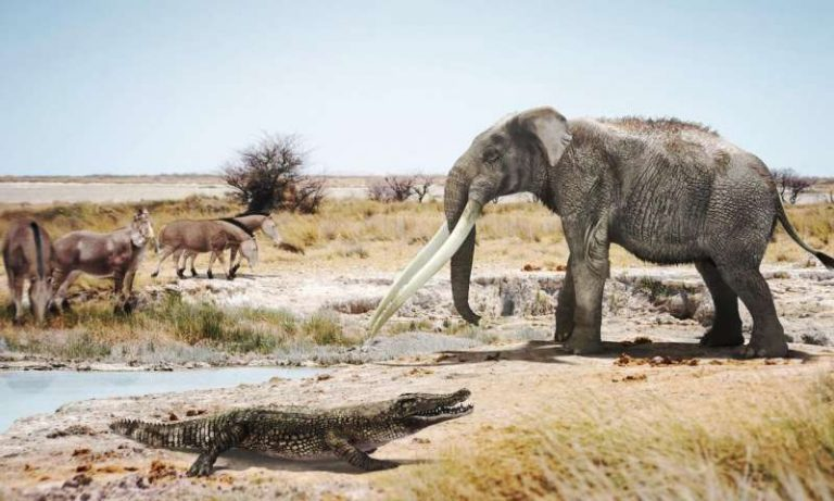 A crocodile next to a mastodon of the genus Anancus and primitive horses of the genus Hipparion in a similar environment to what could have been Valencia six million years ago. (Image: José Antonio Peñas (SINC))