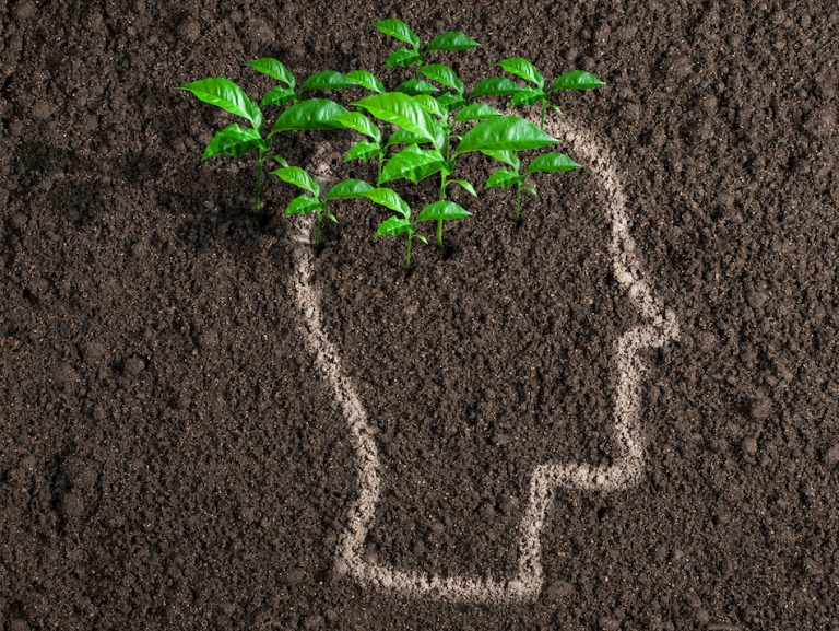 soil with chalk outline as persons head and fresh green plant grows from the mind