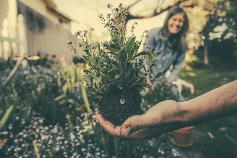 hand holding a plant in the garden with soil as lady in background smiles
