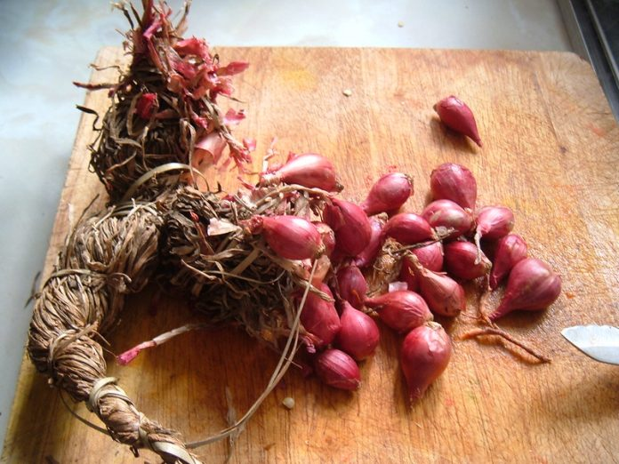 Shallots in a self-tie bundle. This is exactly how the shallots were sold. No plastic wrap, no plastic container - no nothing - just the shallots self-tied. Exactly as it should be! Defend your garden to obtain these hard earned results
