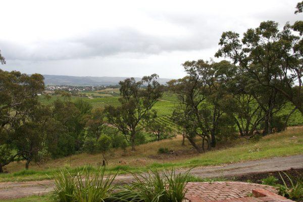 An Australian vineyard. The Australian wine industry has been hit hard by China's tariffs on imported wine.