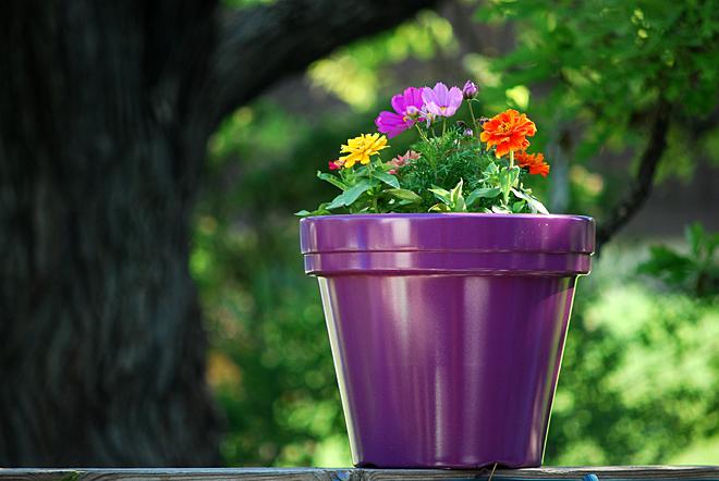 Le piante in vaso possono essere collocate in un vaso più grande riempito d'acqua per mantenere la giusta dose di umidità durante le vacanze. (Immagine: James Jordan tramite Flickr CC BY-ND 2.0)