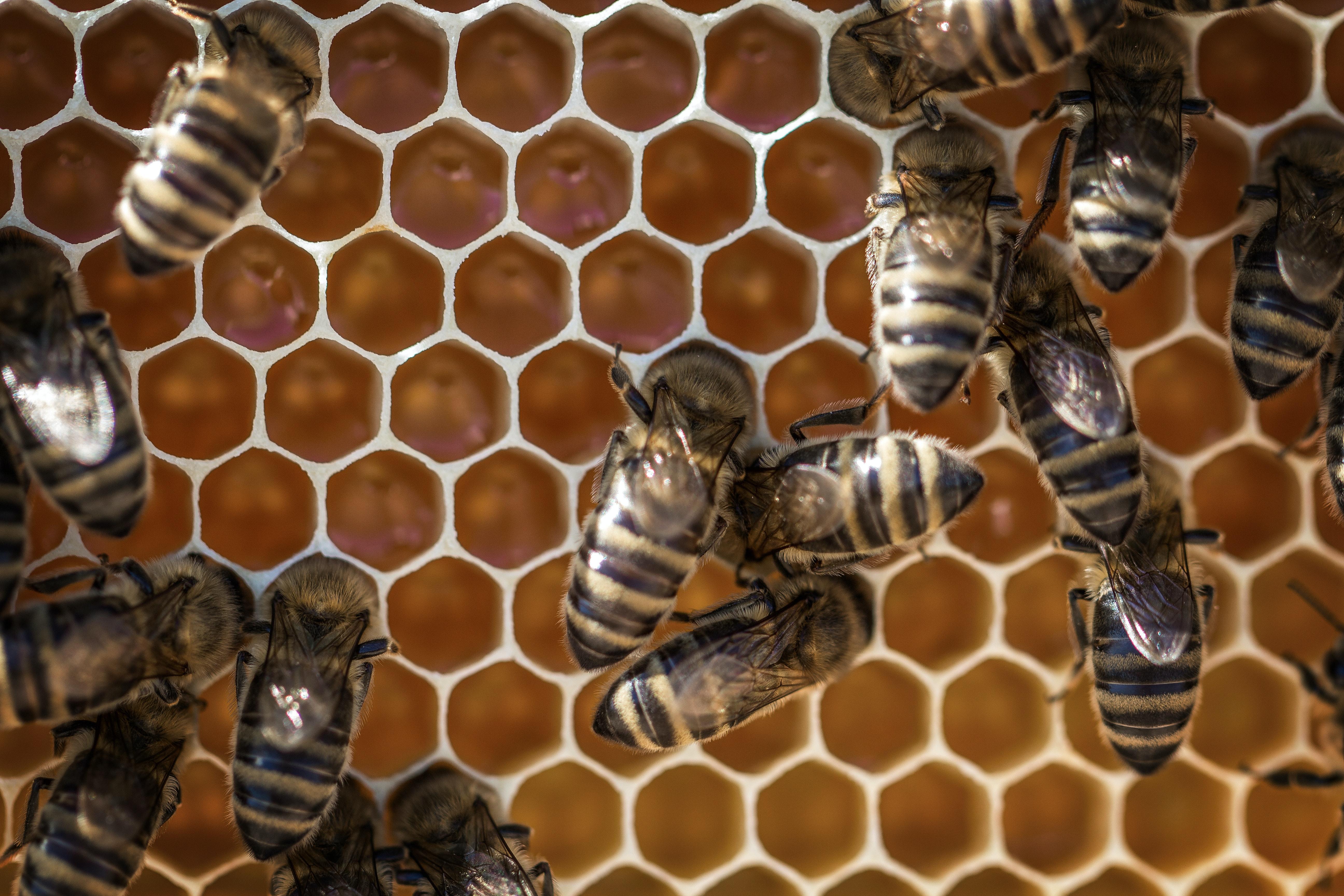 api in alveare