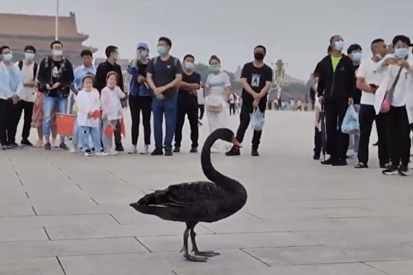 black_swan_tiananmen