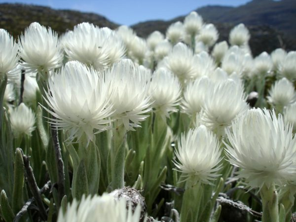 South Africa's Fynbos boasts an amazing array of flowers, many of which are found nowhere else in the world.