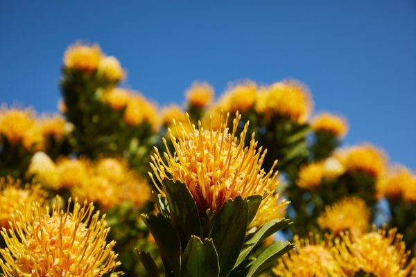 Nectar from a wide variety of Cape flowers makes the Khan sister's Beelal honey unique and delicious.