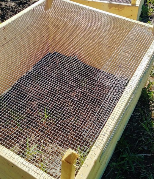 Attaching hardware cloth to the bottom of the raised beds is a great way to defend your garden and keep out moles and voles